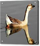 Chinese Goose Acrylic Print