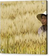 Chinese Rice Farmer Acrylic Print
