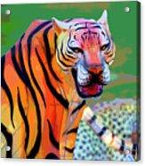Chinese Tiger 2 Acrylic Print