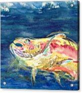 Chinook Salmon Acrylic Print