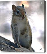 Chipmunk Up Close Acrylic Print