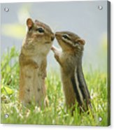 Chipmunks In Grasses Acrylic Print by Corinne Lamontagne