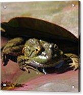 Chiricahua Leopard Frog Acrylic Print