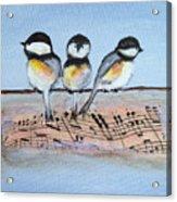 Chirpy Chickadees Acrylic Print