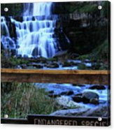 Chittenango Falls State Park Acrylic Print