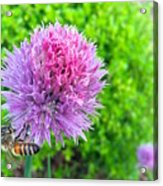 Chive And Bee Acrylic Print