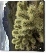 Cholla Cactus Acrylic Print