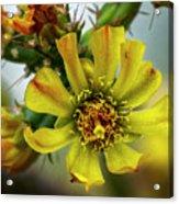 Cholla Flower H1848 Acrylic Print
