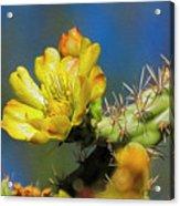 Cholla Flower Op41 Acrylic Print