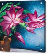 Christmas Cactus Acrylic Print