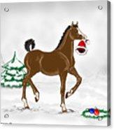 Christmas Colt Acrylic Print