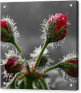 Christmas In May Acrylic Print