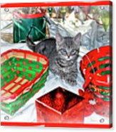 Christmas Kitten  Acrylic Print