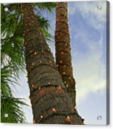 Christmas Lights On Palm Trees Acrylic Print