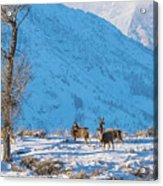 Christmas Morning Magic Acrylic Print