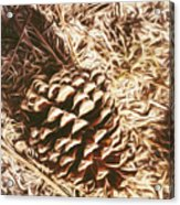 Christmas Pinecone On Barn Floor Acrylic Print