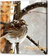 Christmas Sparrow - Christmas Card Acrylic Print