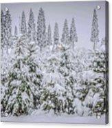 Christmas Tree Farm Acrylic Print