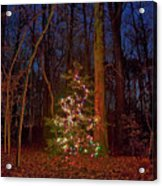 Christmas Tree In Forest Acrylic Print
