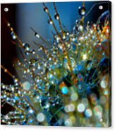 Christmas Tree Made Of Cactus And Water Drops Acrylic Print