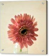 Chrysanthemum #029 Acrylic Print