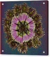 Chrysanthemum Mandala Acrylic Print
