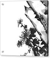 Chrysanthemum Stone 2 Acrylic Print