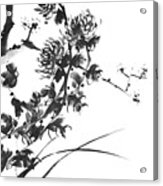 Chrysanthemum2 Acrylic Print