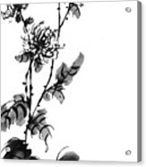 Chrysanthemum3 Acrylic Print