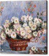 Chrysanthemums, 1878  Acrylic Print