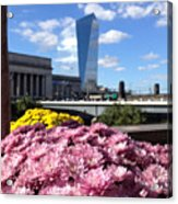 Chrysanthemums And Cirrus  Acrylic Print