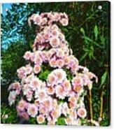 Chrysanths Acrylic Print