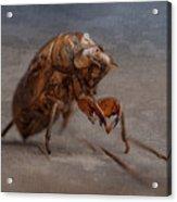 Cicada Shell Acrylic Print