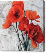 Cinque Papaveri Acrylic Print