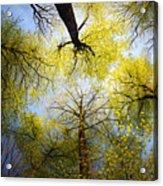 Circle Of Trees Acrylic Print