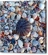 Circluar Shell In Watercolor Acrylic Print