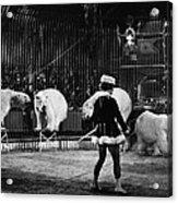 Circus: Polar Bears Acrylic Print