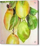 Citrons Acrylic Print