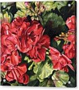 City Flowers Red Geranium Acrylic Print