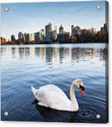 City Swan Acrylic Print