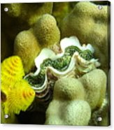 Clam On The Reef Acrylic Print