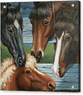Claras Pony Acrylic Print