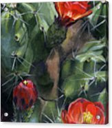 Claret Up Cactus Acrylic Print