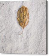 Clash Of Seasons Acrylic Print