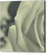 Clasica Acrylic Print