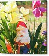 Classic Gnome Acrylic Print