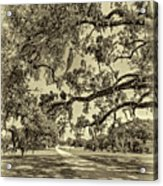 Classic Southern Beauty - Evergreen Plantation -sepia Acrylic Print