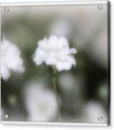 Classic White Acrylic Print