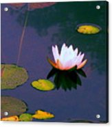 Clear Reflections Lotus Acrylic Print