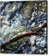 Clear Water Level With Twigs Acrylic Print